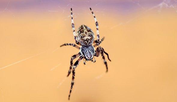 Spider, Cobweb, Close, Insect, Macro, Nature, Arachnid
