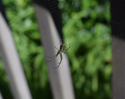 Orchid Spider, Spider, Arachnid, Animal, Green, Web