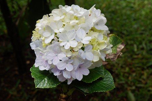 Jasmine, Flowers, White, Garden, Ship, Wedding, Leaves