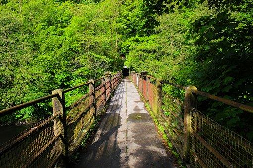 Bridge, Wood, Nature, Landscape, Wooden, Travel