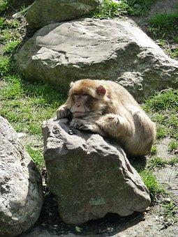 Monkey, Stone, Zoo