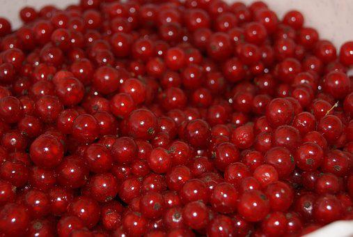 Currant, Red Currant, Fruit, Red, Jam, Garden, The Plot