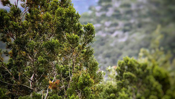 Cedar, Texas, Hill Country, Nature, Trees, Country