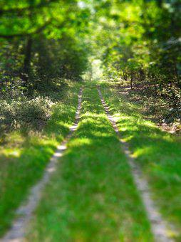 Tiltshift, Walk In The Woods, Path, Veluwe, Beekbergen