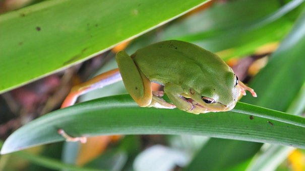 Toad, Frog, Green, Animal, Water, Nature