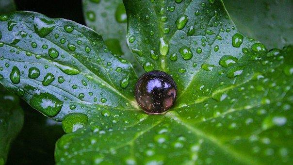 Leaf, Waterdrops, Marbleball