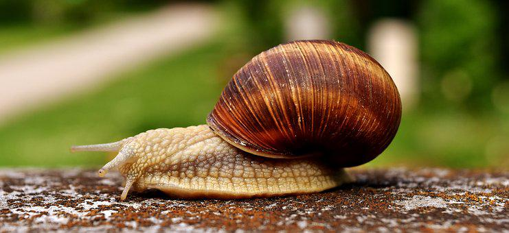 Snail, Animal, House, Crawl, Shell