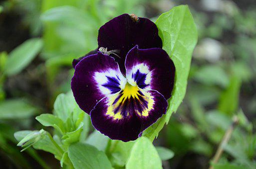 Annie, Flower, Anythiny Eyes, Flowers, Green, Purple
