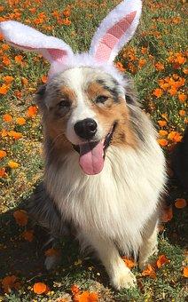 Dog, Ester, Bunny Was, Animal, Cure, Funny, Happy