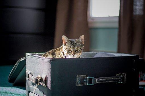 Travel, Cat, Kitten, Suitcase, Animal, Pet, Vacation