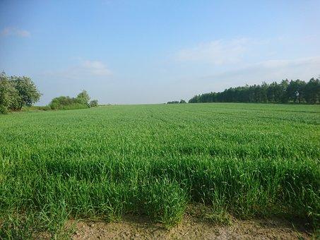 Meadow, Field, Farm, Nature, Plant, Summer, Landscape