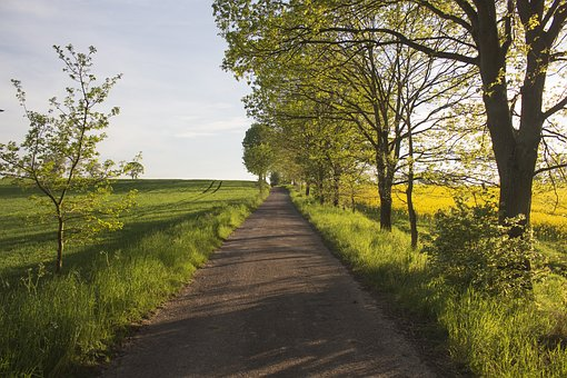 The Polish Roads, Rural Roads, Nature, Fields, Rapeseed