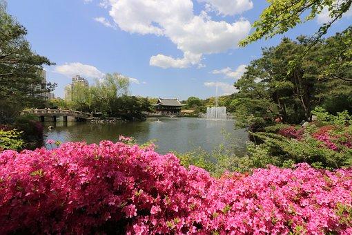 Seongnam, Central Park, Park, S Can Tho Festival