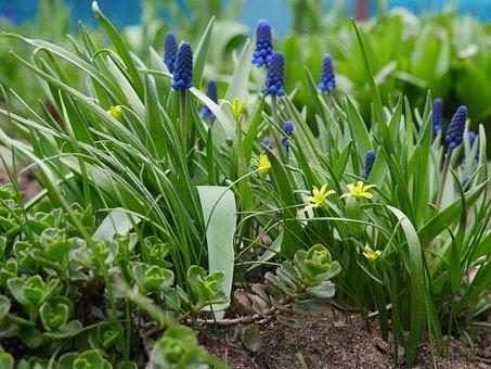 Spring, Awakening, The First Flowers, Primroses