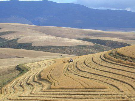 South Africa, Harvest, Garden Route, Tractor, Farm