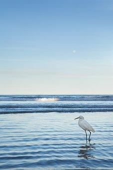 Nature, Birds, Animal, Fauna, Tropical Birds, Blue Sky
