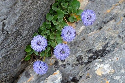 Flowers, Mountain, Alps, Apuane, Carrara, Tuscany