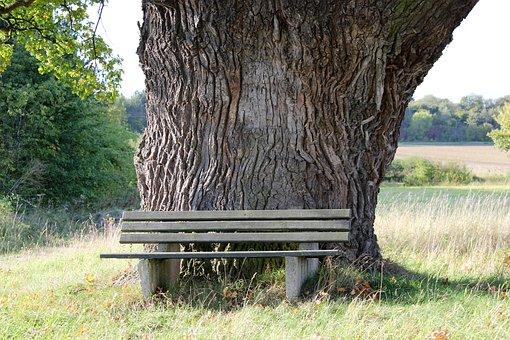 Oak, Bank, Nature, Court Oak, Breuna