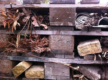 Insect, Insecthotel, Farming