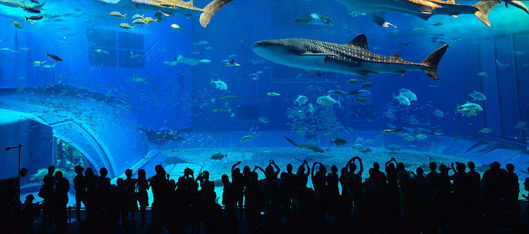Okinawa, Kuroshio, The Whale Shark