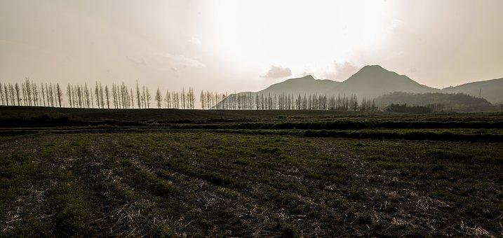 Moganshan, Tree, Highway