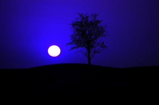 Night, Night Sky, Moon, Moonlight, Sky, Darkness, Tree
