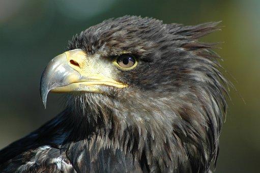 Eagle 9, Raptor, Observing