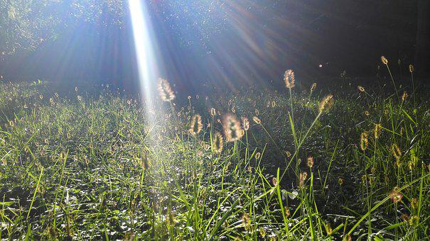 The Dog's Tail Grass, Sunshine, Sway, Autumn