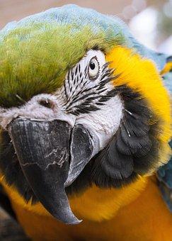 Animal, Parrot, Bird, Gaga, Colors, Feather, Fly, Macro