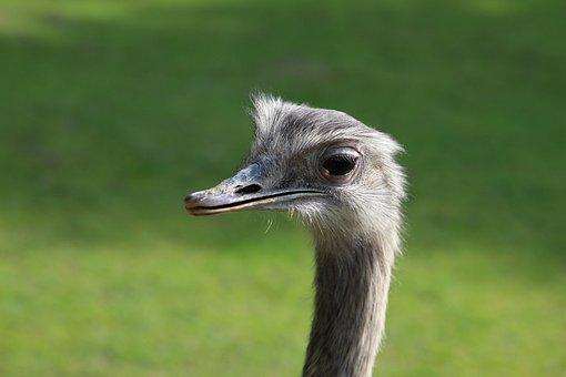 Bouquet, Zoo, Augsburg, Ostrich, Wildlife Photography