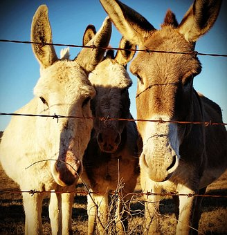 Donkey, Friends, Amigos, Cute, Farm, Animal, Fun