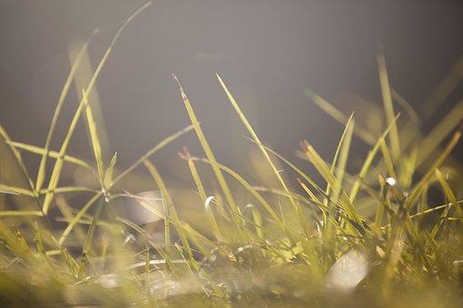 Grass, Macro, Texture, Morning Freshness, Growth