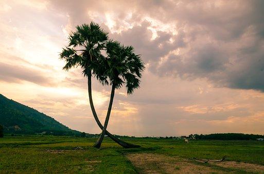 Tree, Palm Trees, Jaggery Tree, Coconut Tree, Sky