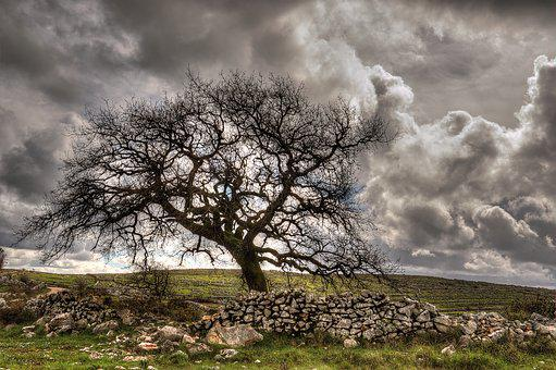 Tree, Clouds, Sky, Nature, Landscape, Light, Mountain