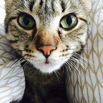Kitten, Ivy Loudomergu, Littlest Baby Kitten