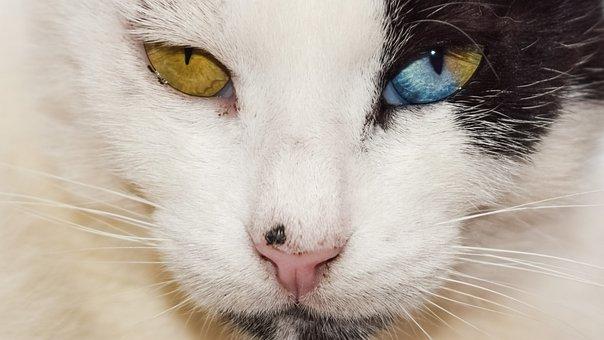 Eyes, Strange, Cat, Stray, Animal, Kitty, Stare, Head