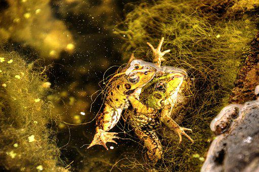 Nature, Frogs, Animal, Amphibian, Wild, Green, Toad
