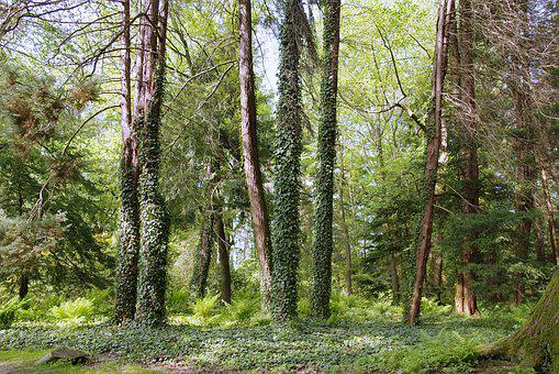 Forest, Green, Lets Go, Tree, Nature, Ivy, Natural
