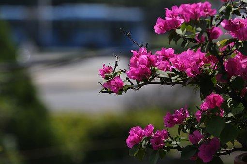 Flower, Flowery Hazel, Flowers, Florir, Tulipa, Spring
