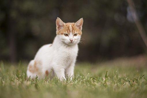 Cat, White, Animal Portrait, Animals, Nature, Cute