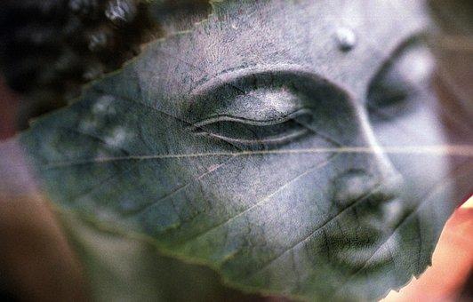 Buddha, Leaf, All Is One, Religion, Buddhist