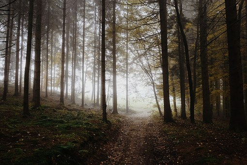 Forest, Away, Morning, Trees, Nature, Landscape, Autumn