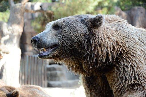 Bear, Nature, Animal, Animals, Jump, Language, Puppy