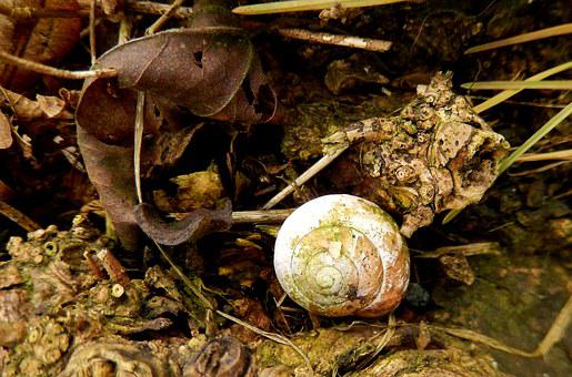 Shell, Nature, Abandoned, Checkbook Houses