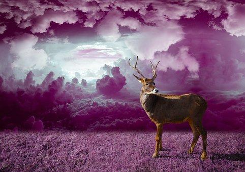 Reindeer, Winter, Christmas, Deer, Xmas, Holiday