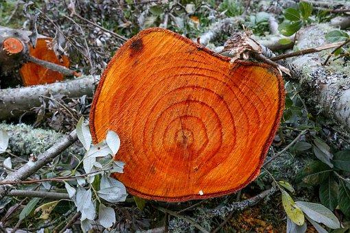 Tree, Stump, Wood, Forest, Wooden, Tree Trunk, Cut