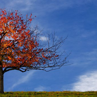 Tree, Autumn, Leaves, Fall Foliage, Red, Brown, Half