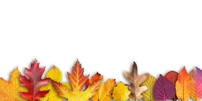 Autumn, Banner, Border, Text Box, Invitation, Map