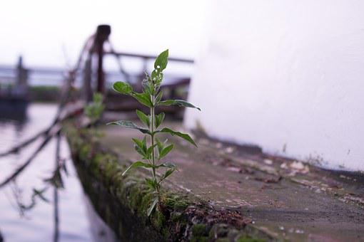 Boat, Branch, Plant, Scrap, Junk, Rust, Salvage