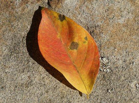 Orange Leaf On Stone Wall, Leaf, Plant, Tree